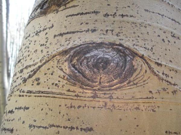 Aspen Eye. Uploaded to Photobucket by TreNarTheGreat