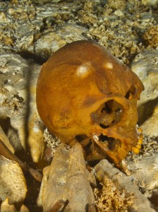 The skull of Naia on the floor of Hoyo Negro, as it appeared in December 2011, having rolled into a near-upright position. (Photo by Roberto Chavez Arce)