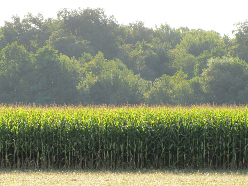 Corn on the march